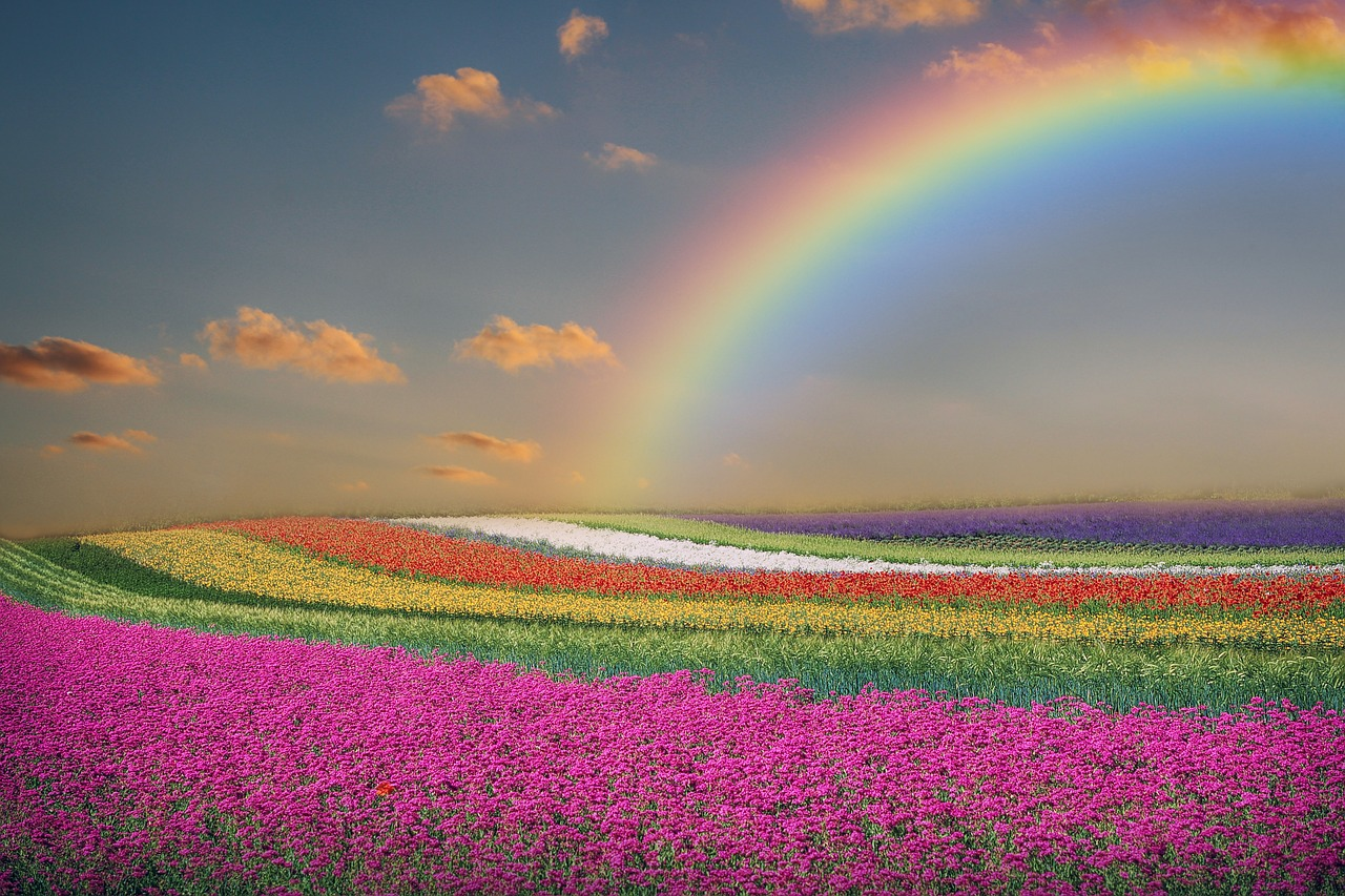 фото природа цветы радугой свою ловлю