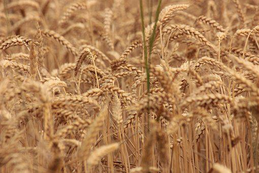 Россельхознадзор хочет вести реестр экспортеров зерна
