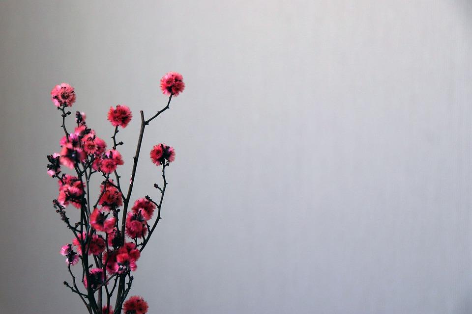 Flores Flor Plano De Fundo Papéis - Foto gratuita no Pixabay
