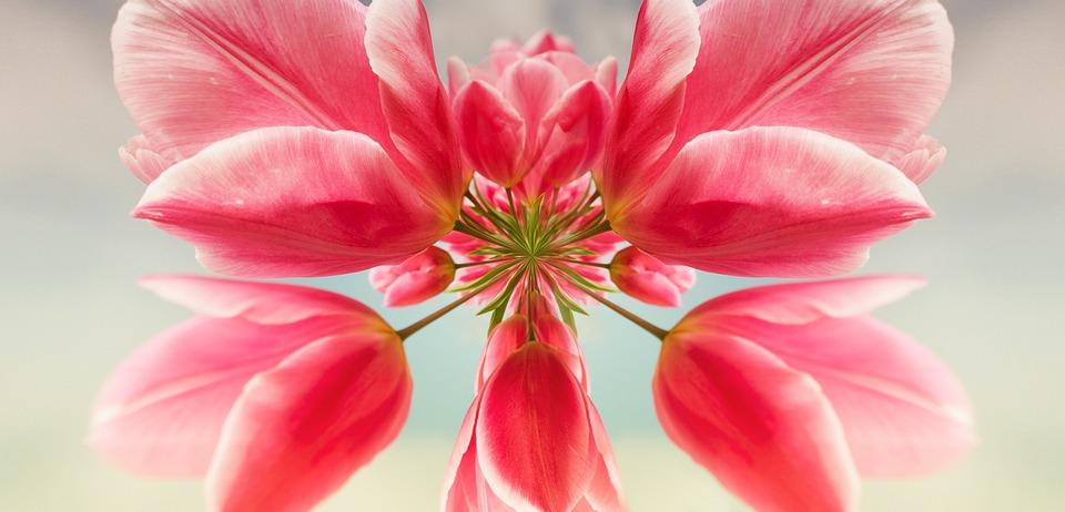 Download 83 Gambar Bunga Tulip Abstrak Paling Keren