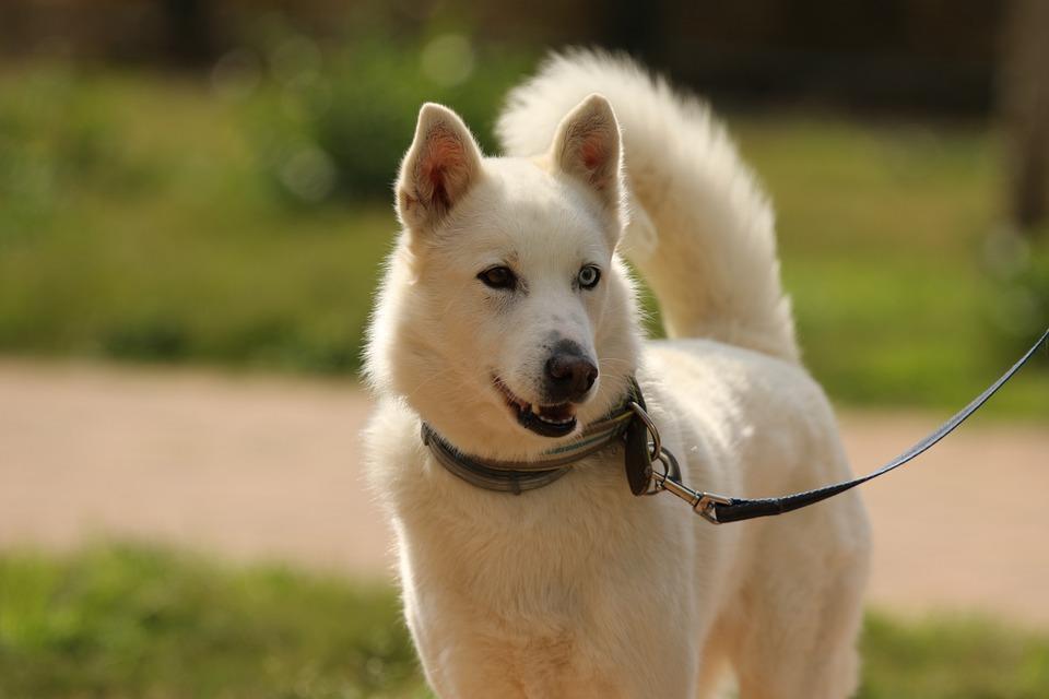 Perro-primer-animal-domesticado