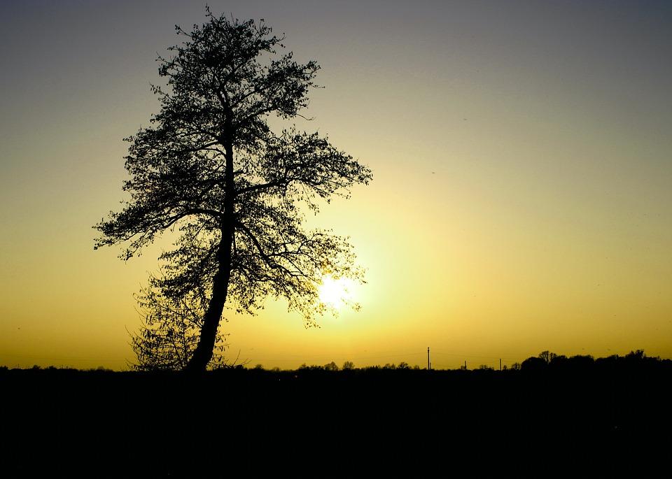 Sonne Gelb Baum Kostenloses Foto Auf Pixabay