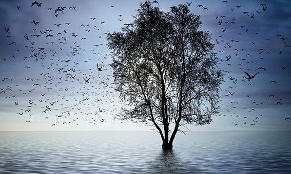 Alam, Burung, Matahari Terbenam, Siluet