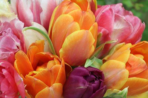 Tulipány, Jasný, Kytice, Květiny, Květ