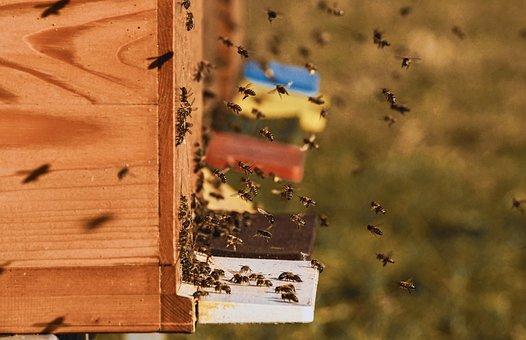 Bee Colonies, Bees, Beehive, Beekeeper
