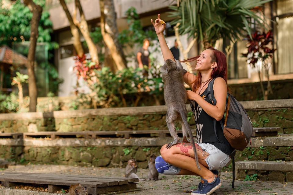 Bali, Indonézia, Majom, Park, Koldus, Ellopja, Férfi