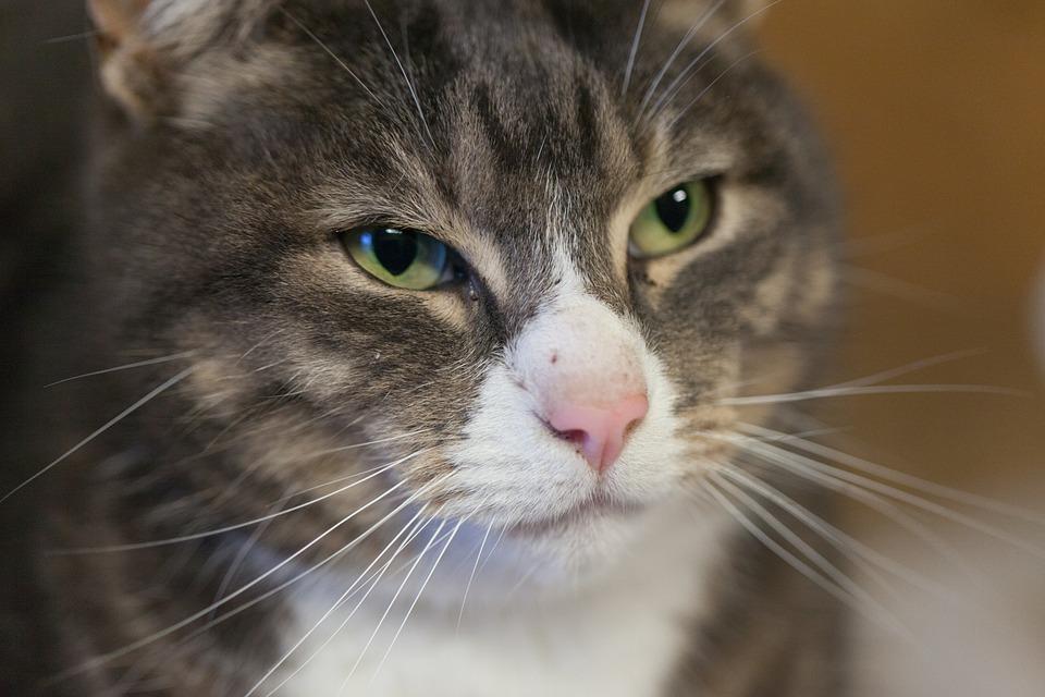89ae1cda8c6d Γάτα Ζώα Κατοικίδιο Ζώο - Δωρεάν φωτογραφία στο Pixabay