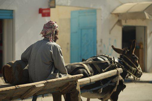 Tunisia, Man, Team, Donkey, Road, Rides
