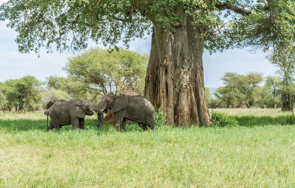 Éléphant, Safari, Afrique, La Faune, Des Animaux