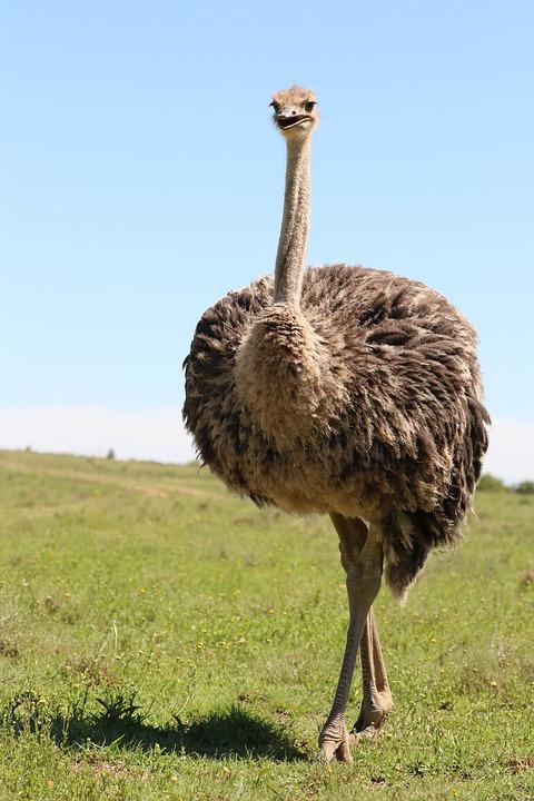 Αφρική μεγάλο πουλί