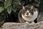kot, w ogrodzie, zwierząt