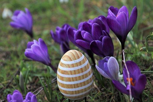 Egg, Garden, Easter, Crocus, Spring