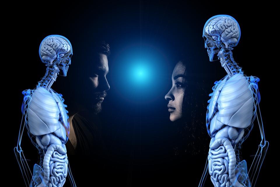 Tudatosság, Anatómia, Emberi, Férfi, Nő, Átláthatóság