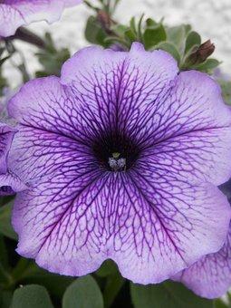 Plantes de jardin - Comment identifier quelle plante de jardin je dois planter ?