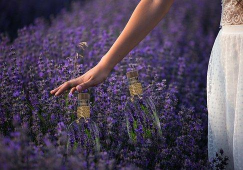 Spring, Lavender, Flowers, Garden