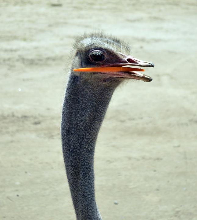 čudáka s veľkými vtáky hubetube Penzión
