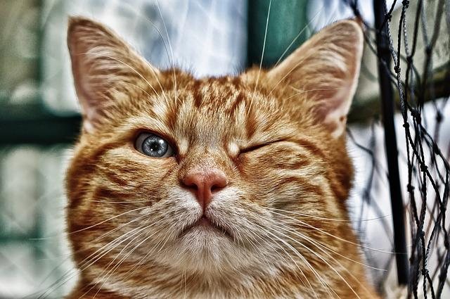 Kočička kočička hd