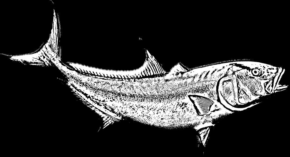 fish-4035927_960_720.png