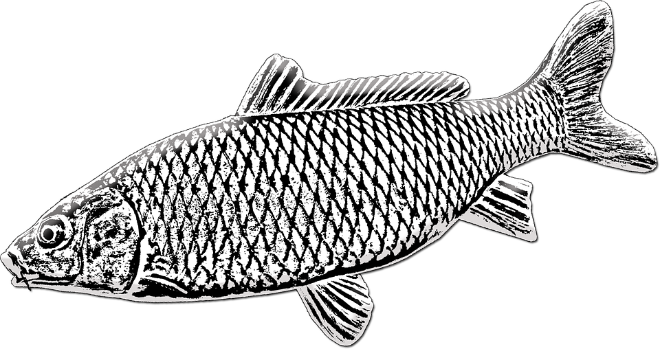A halászati tavacska