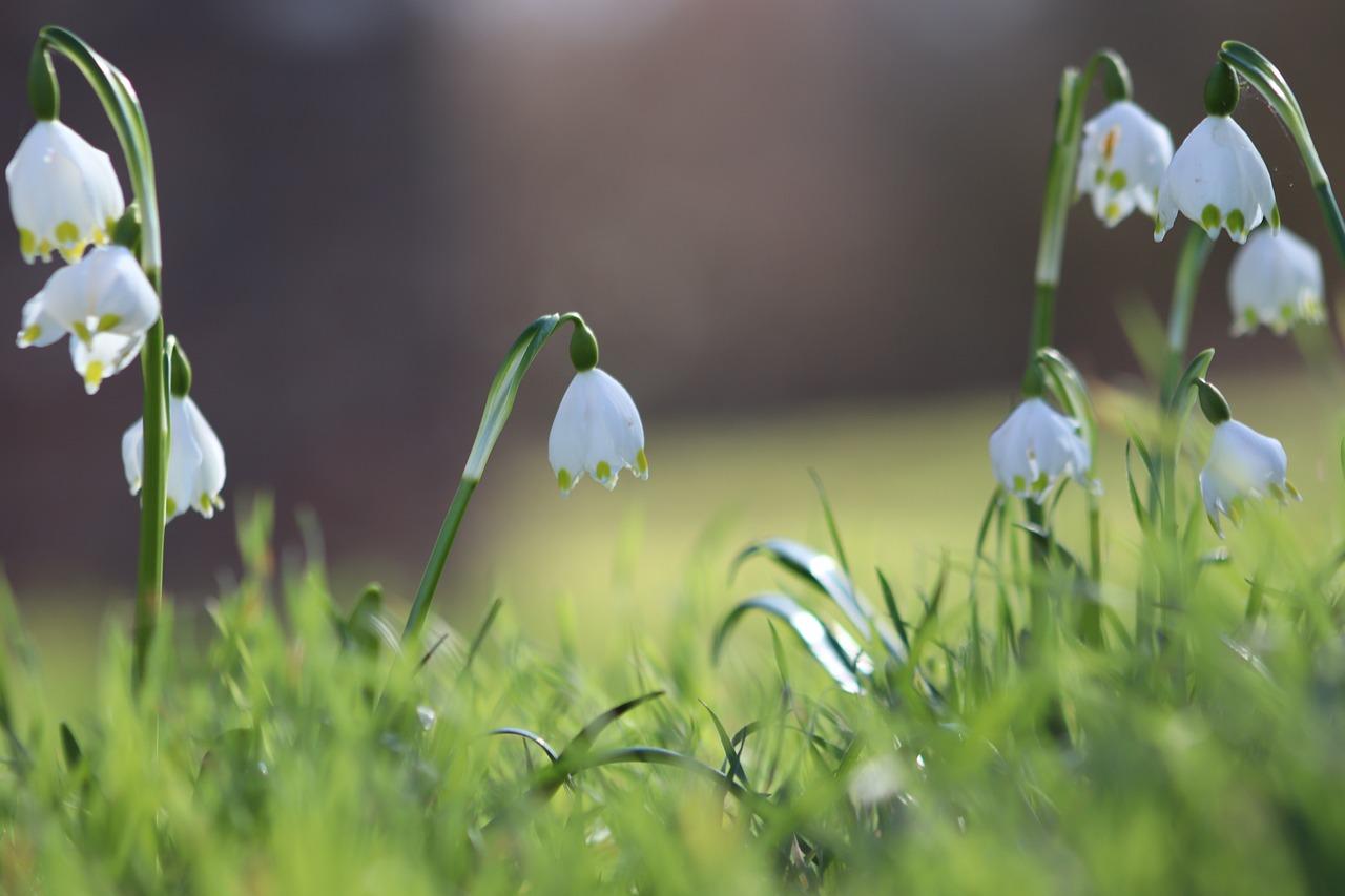 snowflake,flower,