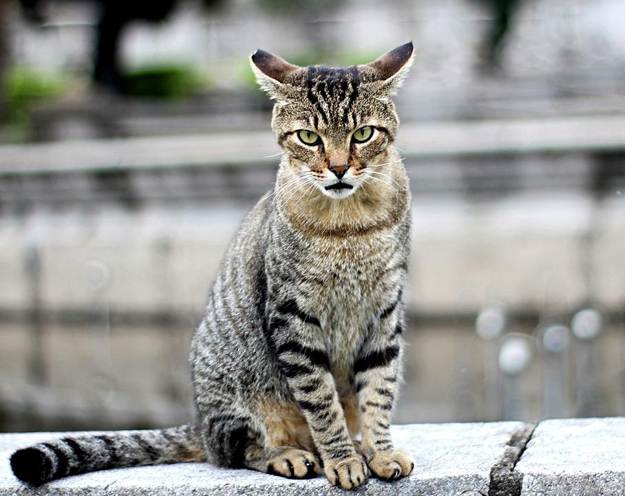 Obrázky krásné kočičky