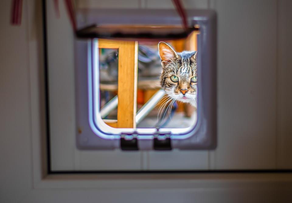Kattenluik, Kat, Kijk Door, Kijk In Het