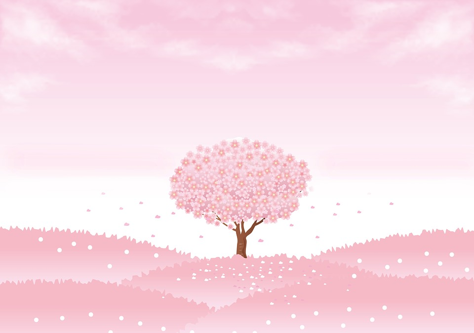 Spring Background, Sakura Tree, Cherry Tree, Sakura