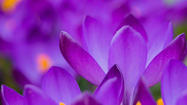 46 Koleksi Wallpaper Hp Bunga Cantik HD Terbaik