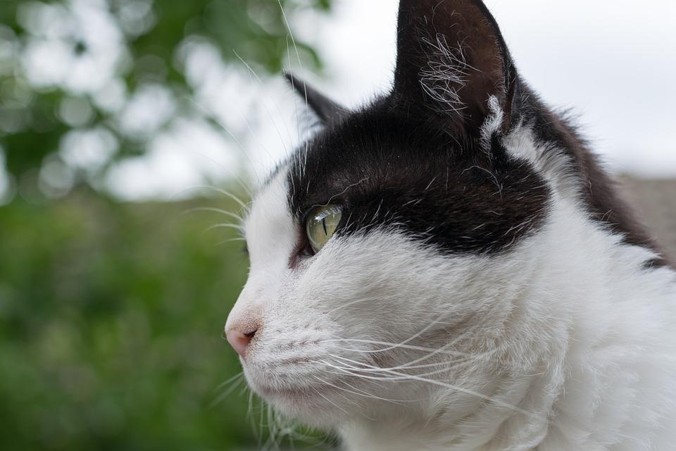 3eeee409576c Γάτα Πορτραίτο Ζώο Κατοικίδια - Δωρεάν φωτογραφία στο Pixabay