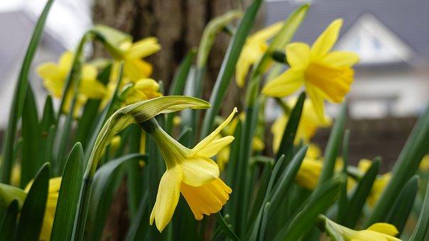 Bollen Bloeiend Voorjaar : Bloembollen beelden pixabay download gratis afbeeldingen