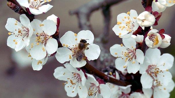 Spring Flowers Fénykép - Ingyenes képek letöltése - Pixabay