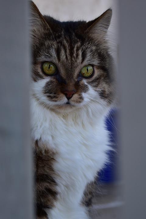 b2f6cab28ca7 Γάτες Αρκετά Ζώο - Δωρεάν φωτογραφία στο Pixabay