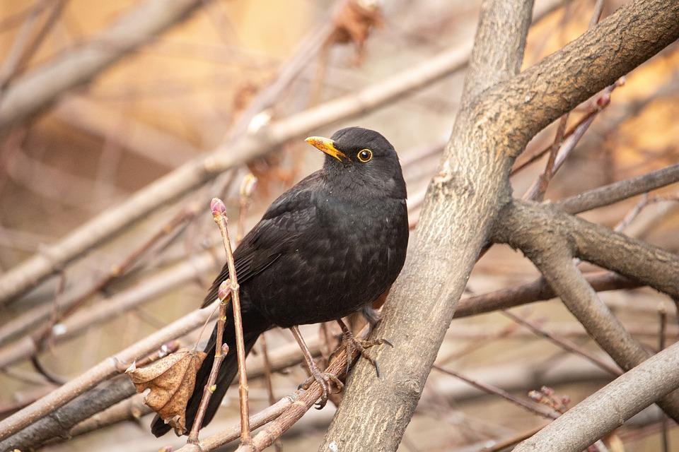 Μαύρο μαύρο πουλί