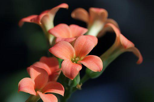 花卉, 盆栽的植物, 植物, 大自然, 鲜花, 迷你盆栽, 万客隆, 贴上