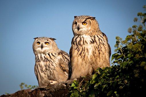 staršie veľké vtáky