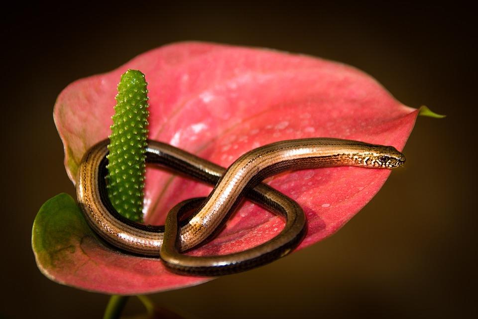 80+ Gambar Salamander Cacing Paling Hist