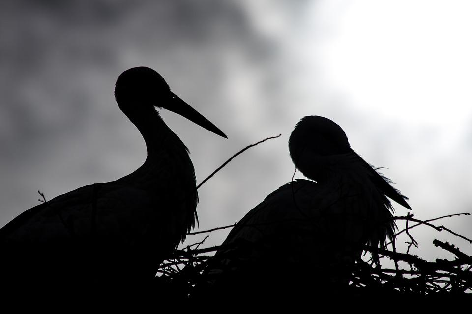 105 Gambar Binatang Burung Sarang Gratis