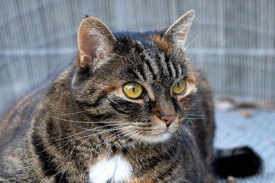 db477639d865 Γάτα Ζώο Σκουμπρί Κατοικίδιο - Δωρεάν φωτογραφία στο Pixabay