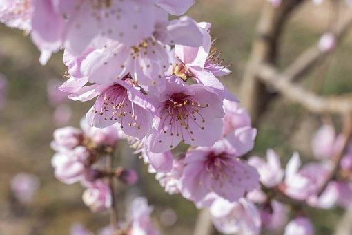 kirsikka kukka ruiskuttaminen huijaaminen vaimo porno putket