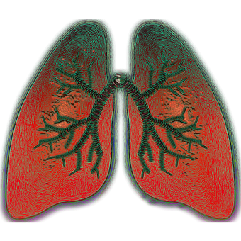 Pulmón, Respiración, Asma, Oxígeno
