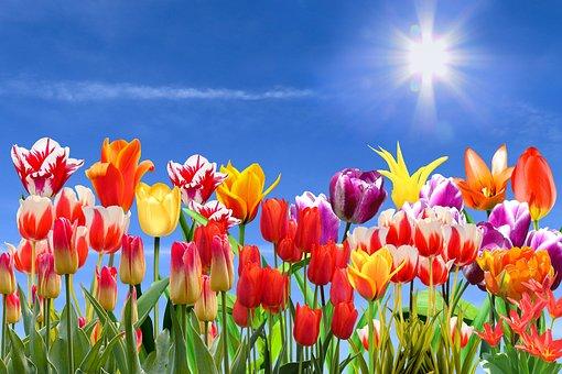 Natur, Landschaft, Frühling, Blumen
