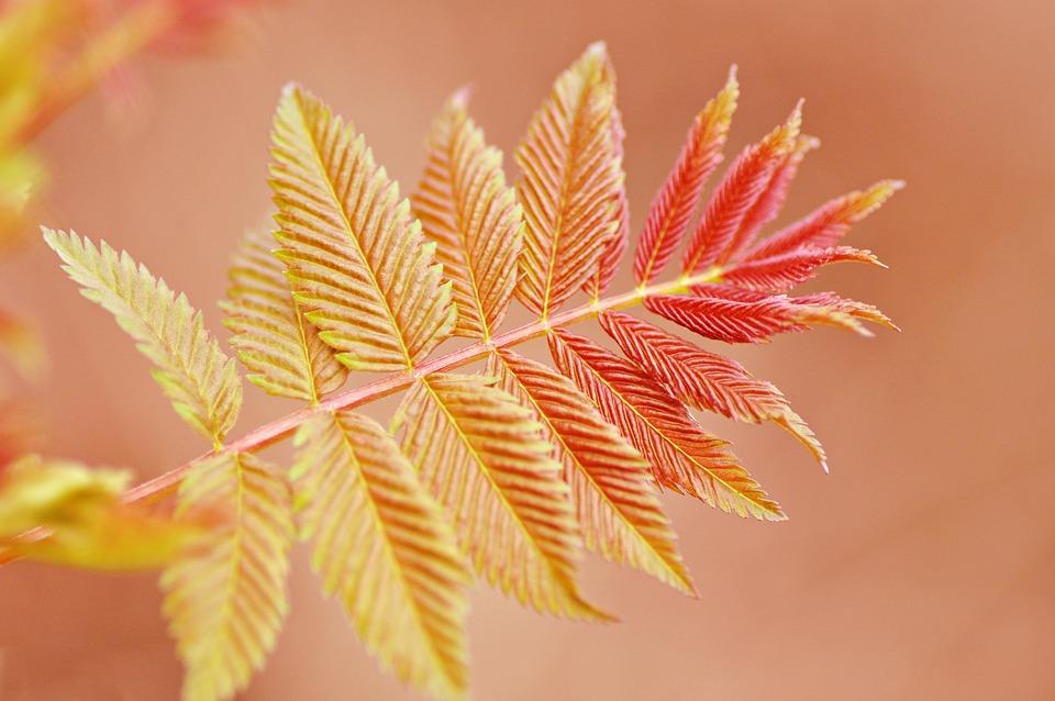 小枝, 葉, 静脈, パターン, 形状, 撮影, 繊細です, 自然, 新しい生命, マクロ