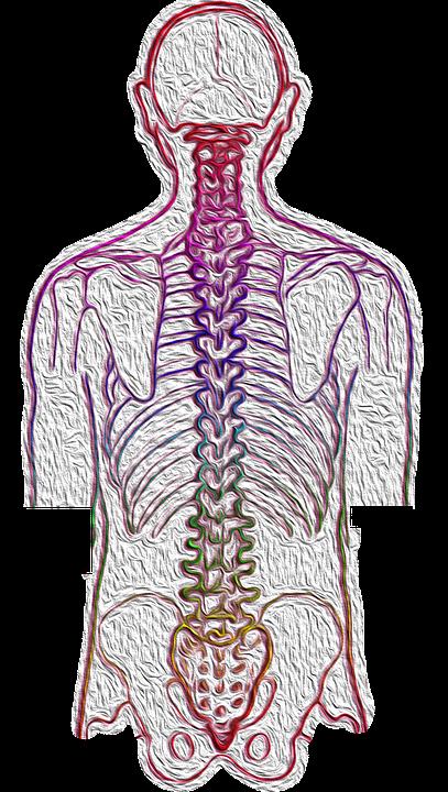 Wirbelsäule Rückenschmerzen Kostenloses Bild Auf Pixabay