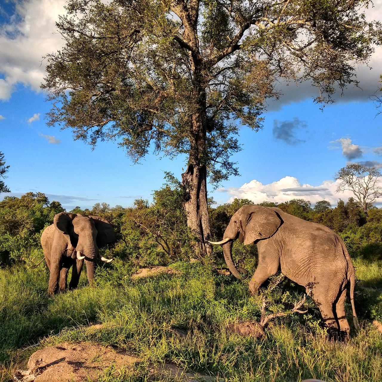обитатели и природа в африке фото карандашом турции загрузили