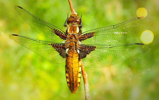 Biologie bilder kostenlose bilder herunterladen pixabay