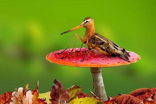 Digiart, Schnepf Vliegen, De Natuur