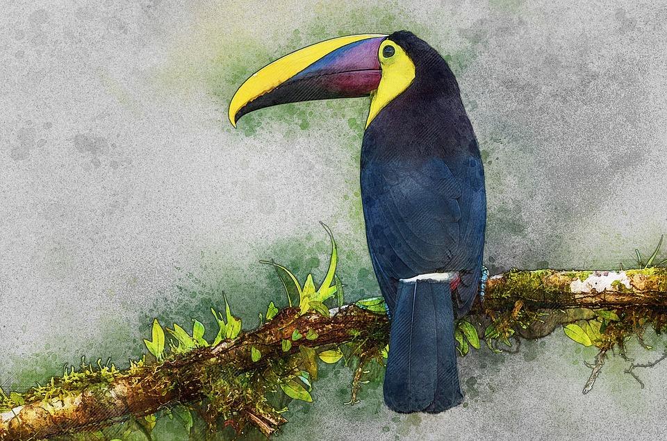 Δωρεάν εικόνα πουλί