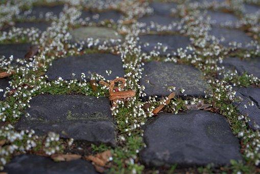 Paving Stones, Flowers, Cobblestones