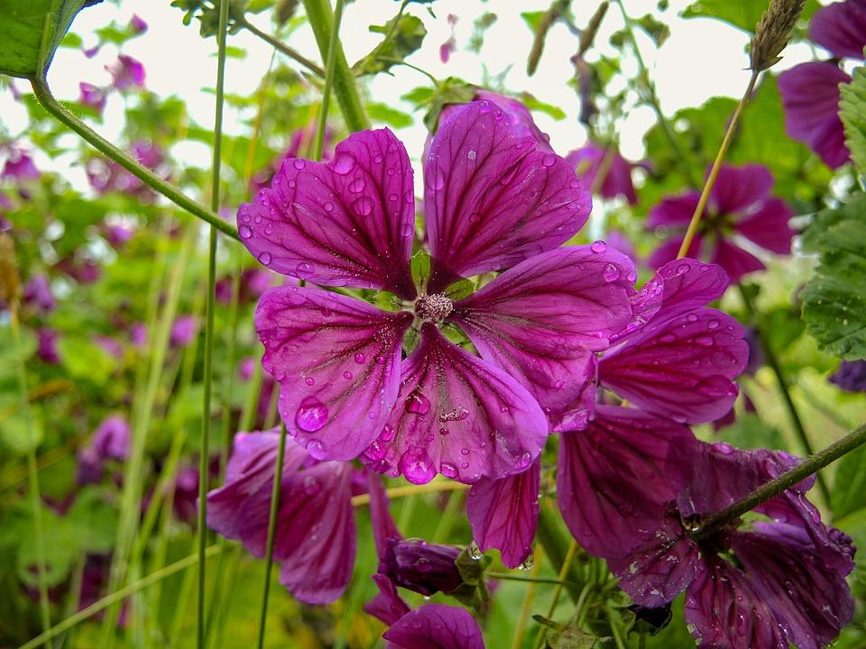 katost blomst