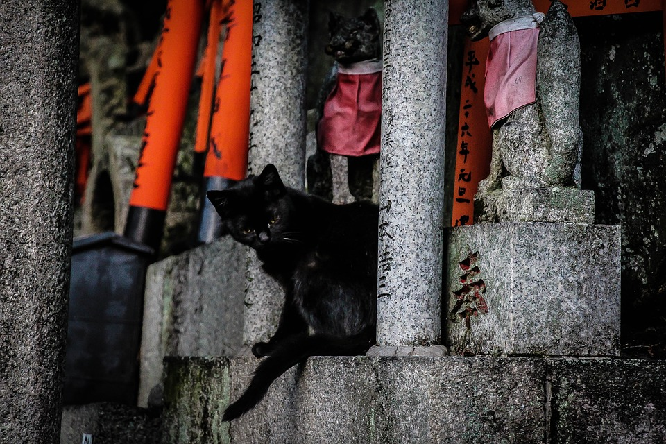 Kyoto, Cat, Temple, Japan, Fushimi